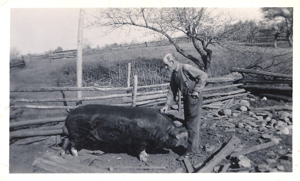 20 Things Your Ancestors Did That You Probably Never Will Albert Martin (father of Garnett Martin) with old sow on Martin farm, Fernleigh.