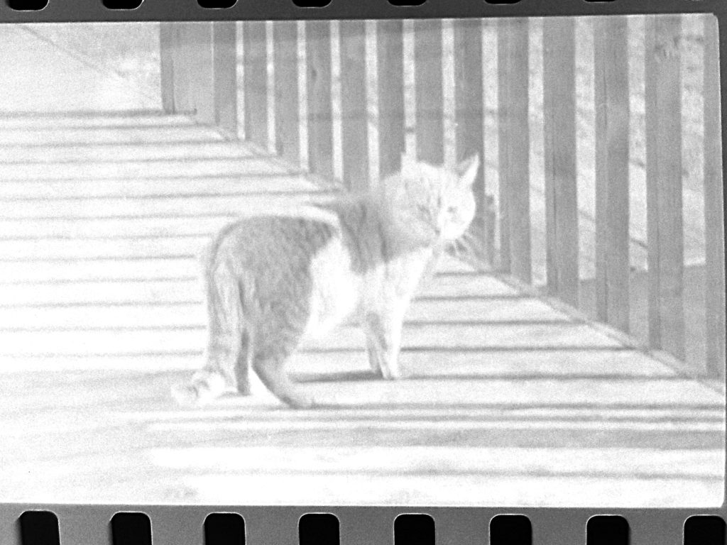 Kodak Negative Scanning Apps - Cat 3